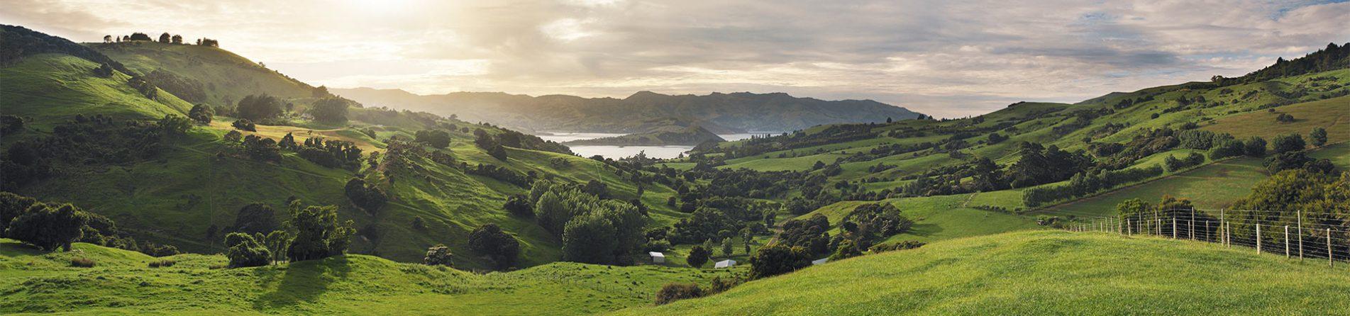Neuseelandhirsch | Prmium by Nature